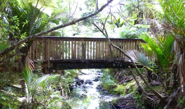 Wooden Bridge on Kitekite Track in Piha